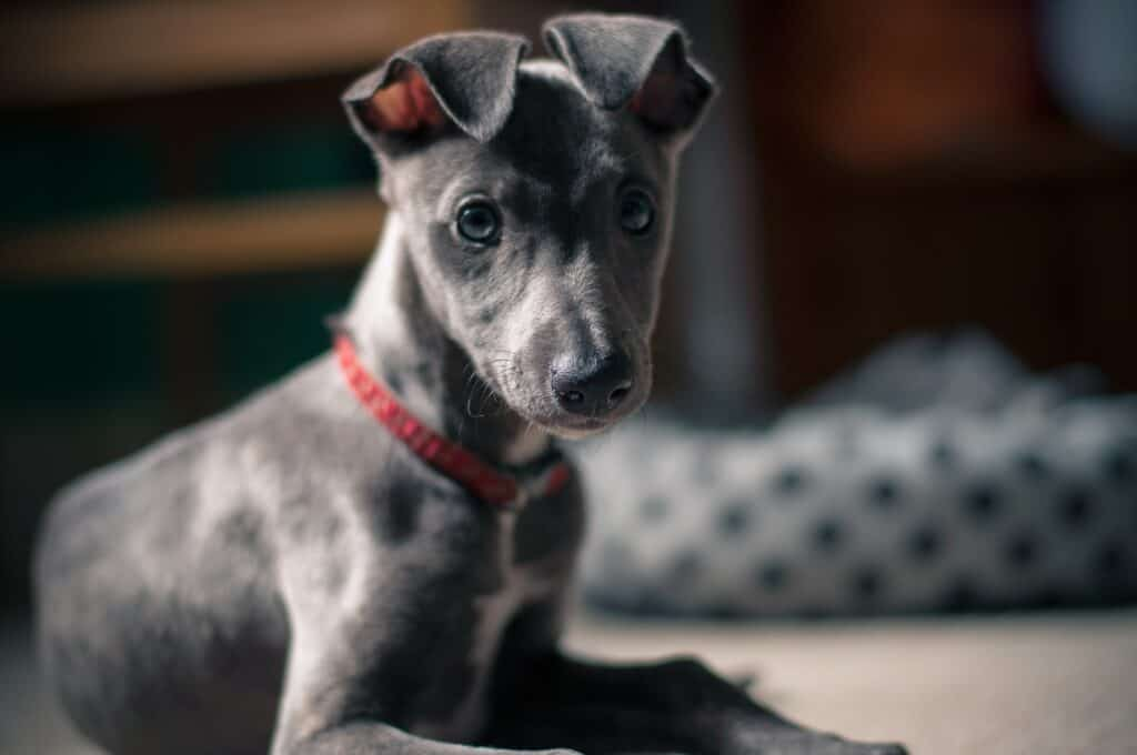 freelance writer, blogs for pet businesses