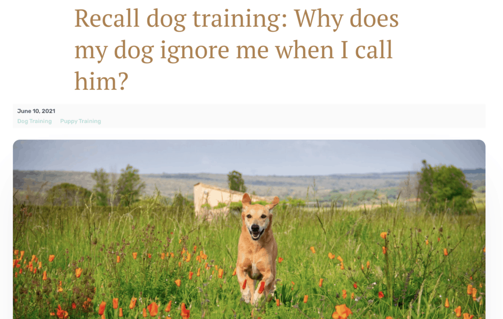 blog post for dog trainer - why does my dog ignore me when I call him?